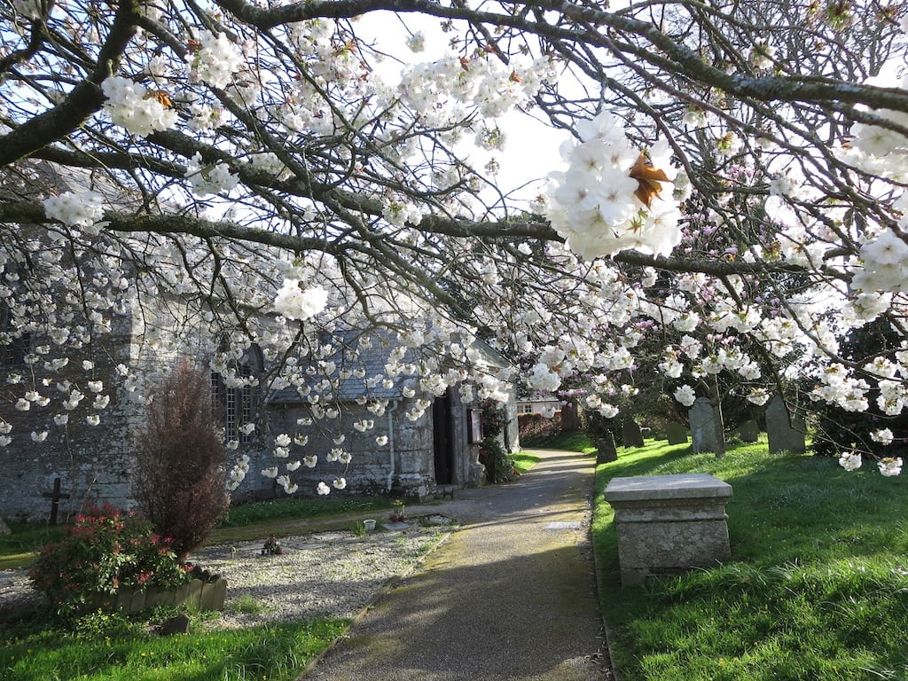 Church Blossom, St Tudy Church